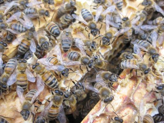 Как у них: «Городские пчёлы» в Лондоне. Изображение № 12.