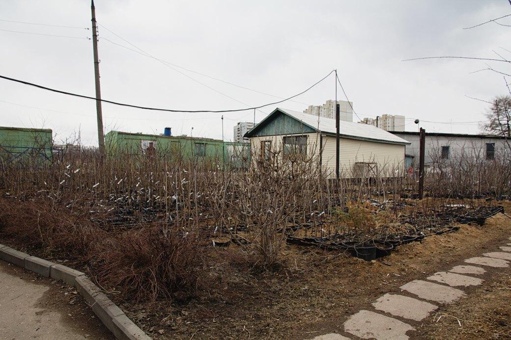 Почему отбирают земли уТимирязевской академии. Изображение № 2.