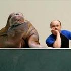 Как живёт и меняется Ленинградский зоопарк . Изображение №45.