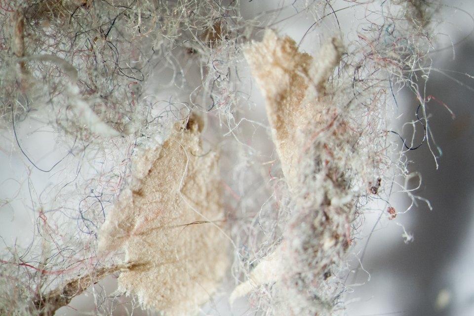 Как выглядит ваша домашняя пыль подмикроскопом. Изображение № 2.