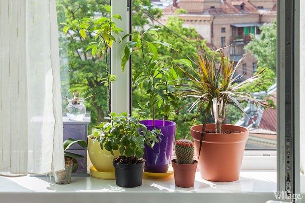 Сделай сад: Что киевляне выращивают у себя на балконах. Зображення № 6.