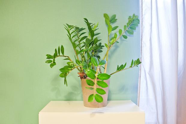 Гид The Village: Комнатные растения. Изображение № 3.