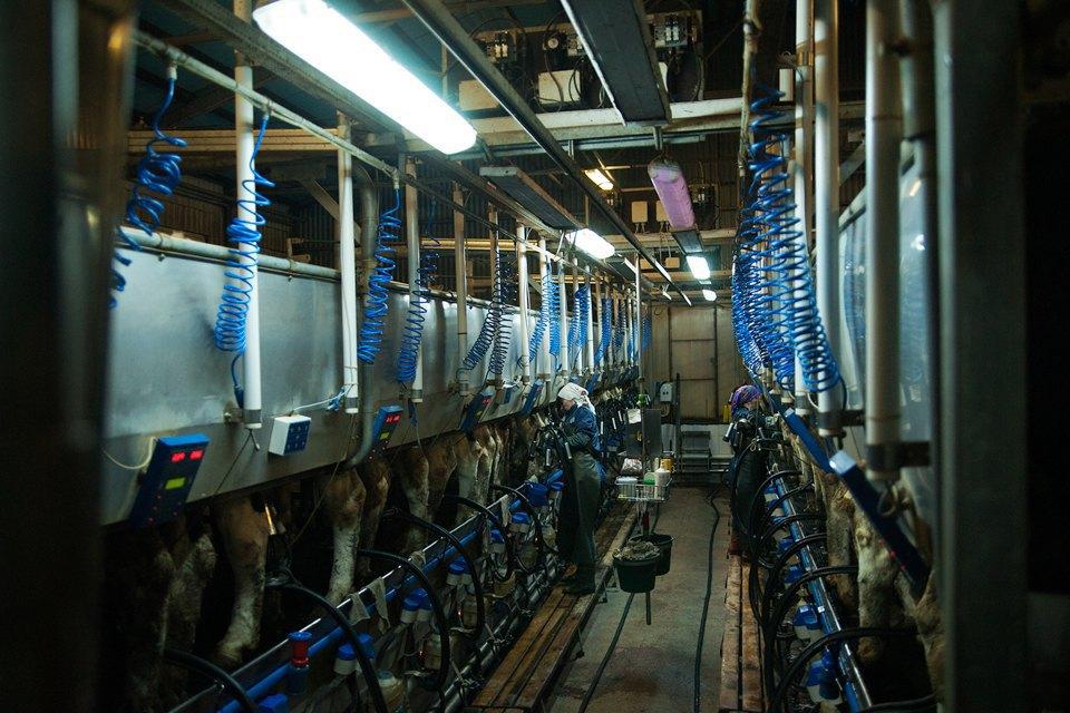 Как делают молочные продукты. Изображение № 6.