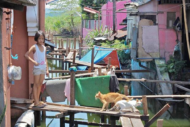Иностранный опыт: Что делать сбездомными собаками. Изображение № 7.