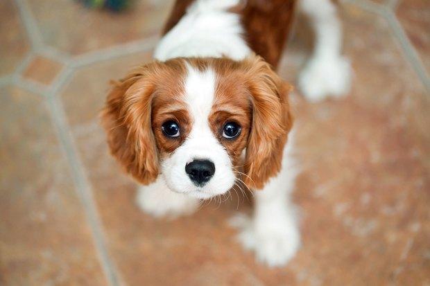 фото маленьких собачек породы