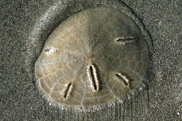 Дизайн от природы: Стекло-паутина и павильон — морской еж в Германии. Изображение № 17.