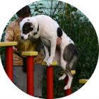 Новости парков: Бассейн в «Сокольниках», променад в «Музеоне» и баскетбол в Северном Тушине . Изображение №18.
