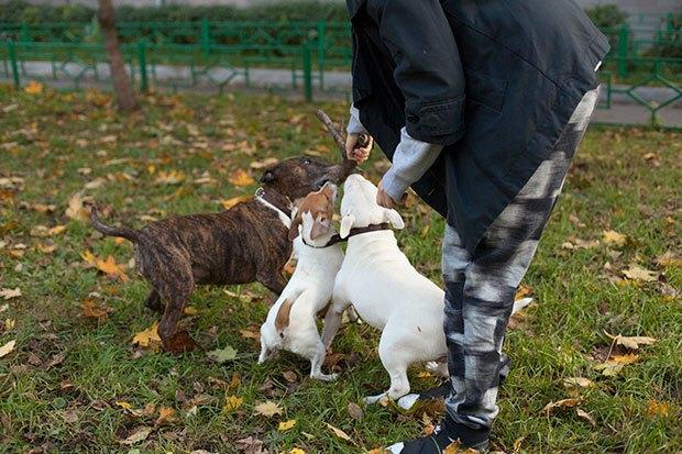 О чем следует знать, прежде чем заводить собаку. Изображение № 8.