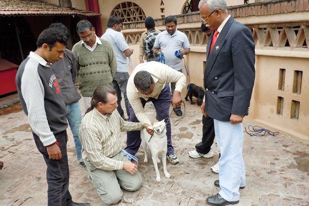Иностранный опыт: Что делать сбездомными собаками. Изображение № 5.