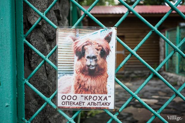 Как живёт и меняется Ленинградский зоопарк . Изображение №47.