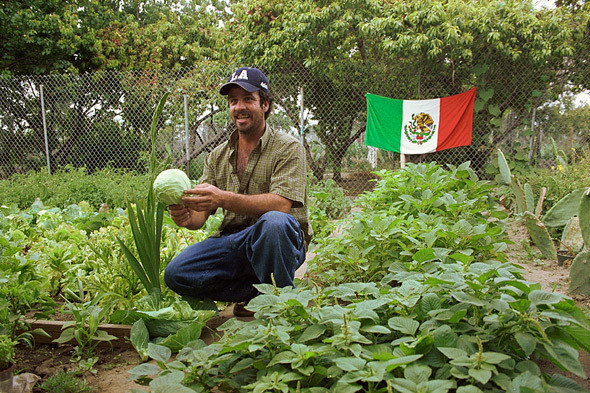 Весёлый фермер: 6 городских огородов. Изображение № 1.