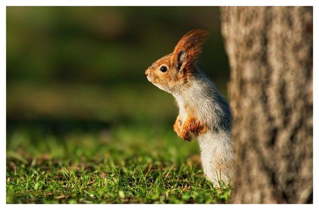 В Летнем саду выставят фотографии диких животных. Изображение № 1.