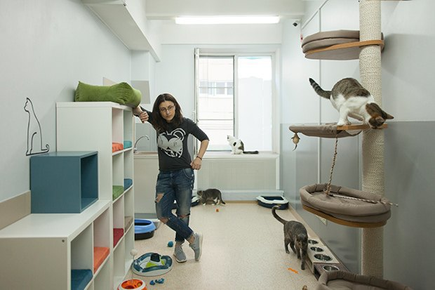 Кошкин дом: Как подготовить квартиру к появлению домашнего питомца. Изображение № 8.