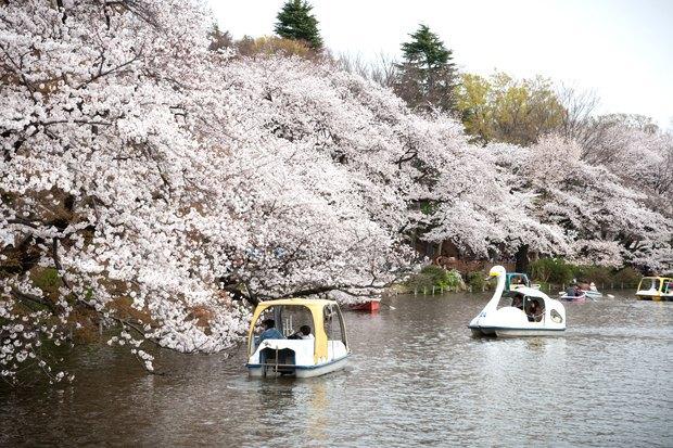 Митака, город соседа Тоторо. Изображение № 6.