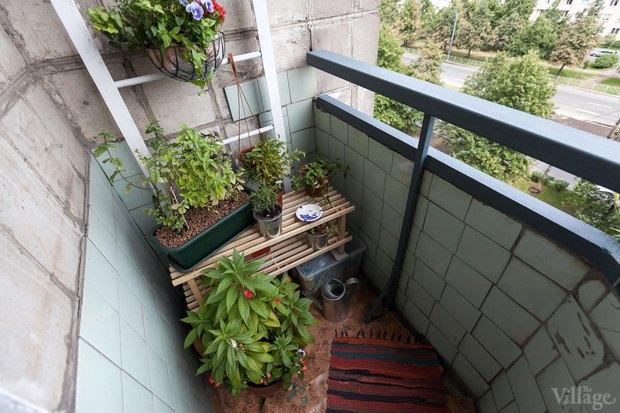 Где посадки: Что горожане выращивают на балконах иподоконниках. Изображение № 5.