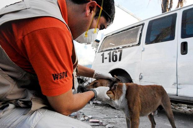 Иностранный опыт: Что делать сбездомными собаками. Изображение № 18.