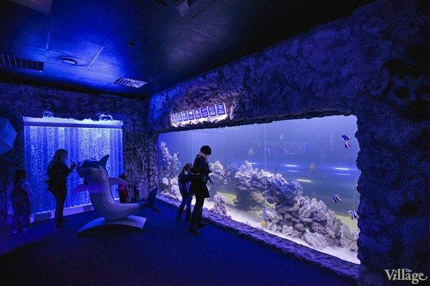 В «Детском мире» начал работать океанариум. Изображение № 7.