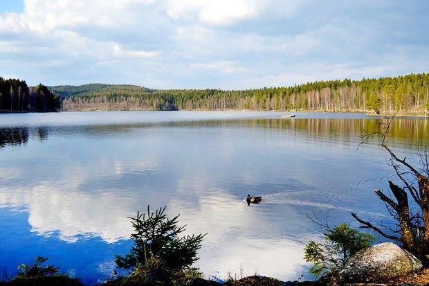 10 мест в Осло, куда ходят сами ословцы. Изображение № 8.