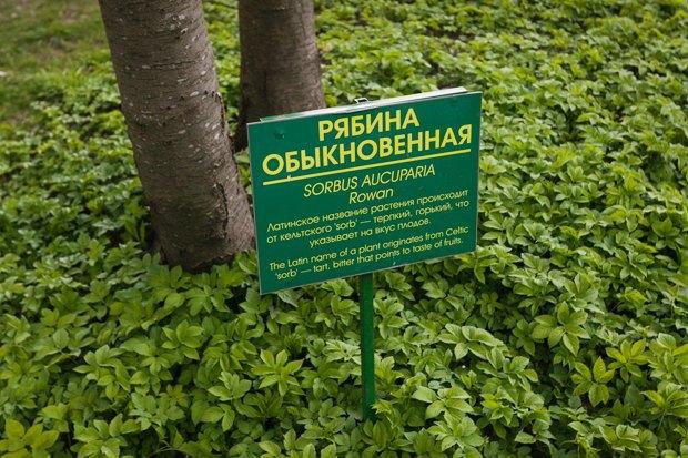 Директор ЦПКиО: «Елагин не станет парком Горького». Изображение № 8.