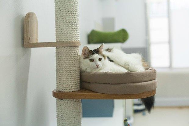 Кошкин дом: Как подготовить квартиру к появлению домашнего питомца. Изображение № 10.