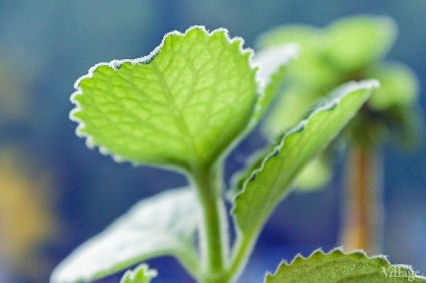 Сделай сад: Что киевляне выращивают у себя на балконах. Зображення № 36.