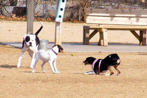Иностранный опыт: Как устроены площадки для выгула собак в 5 городах мира. Изображение № 9.