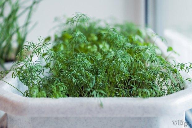 Сделай сад: Что киевляне выращивают у себя на балконах. Зображення № 43.