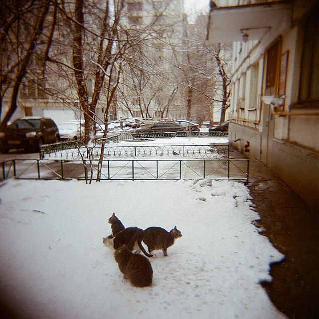 Камера наблюдения: Москва глазами Варвары Лозенко. Изображение №17.