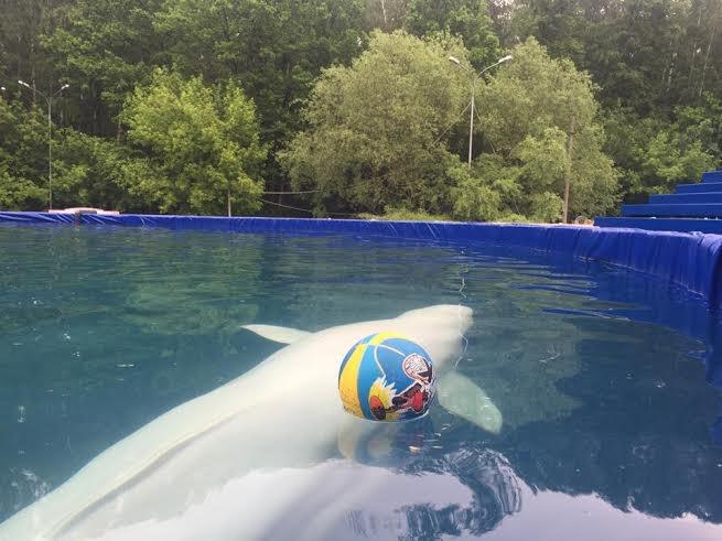 В Измайловском парке открывается летний дельфинарий . Изображение № 2.