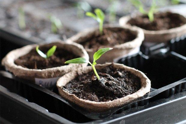 5простых советов для тех, кто хочет заняться огородничеством набалконе. Изображение № 2.