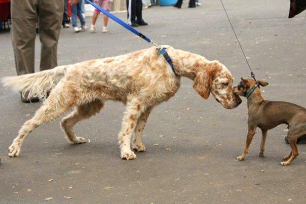Иностранный опыт: Как устроены площадки для выгула собак в 5 городах мира. Изображение № 13.