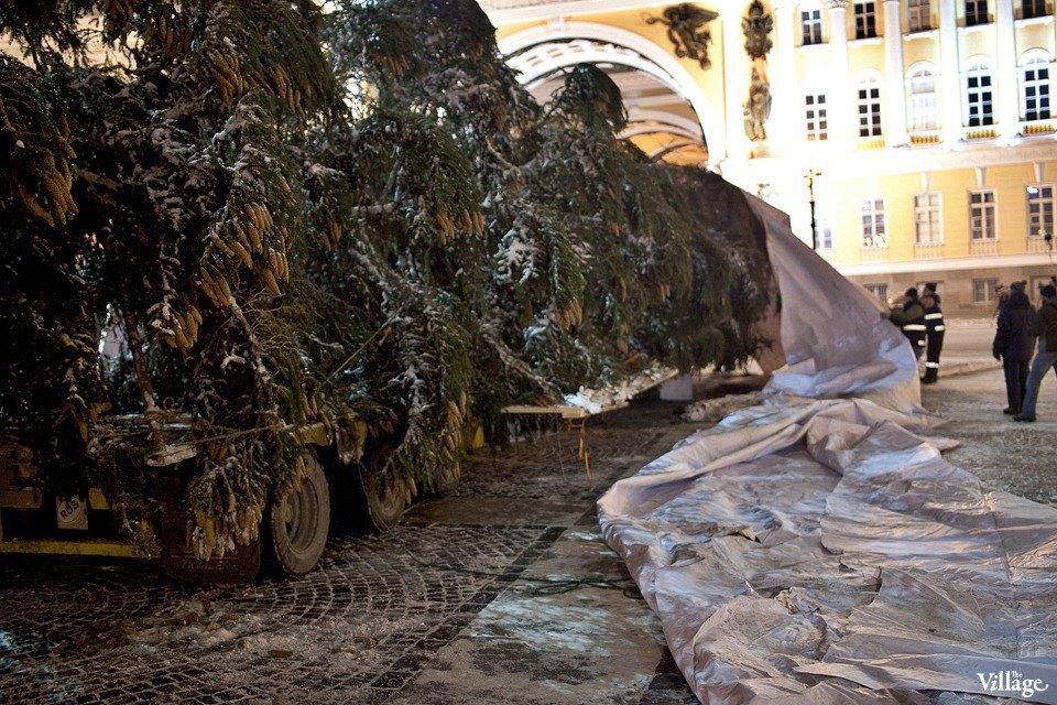 Фоторепортаж: Как устанавливали главную петербургскую ёлку. Изображение № 14.
