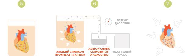 Спустили шкуру: В Киев привезут The Human Body Exhibition. Зображення № 14.