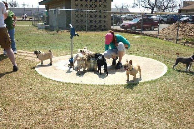 Иностранный опыт: Как устроены площадки для выгула собак в 5 городах мира. Изображение № 10.