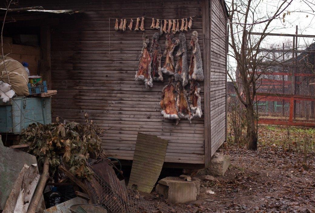Московский лесник — о жизни влесу, битцевском маньяке и диких животных города. Изображение № 5.