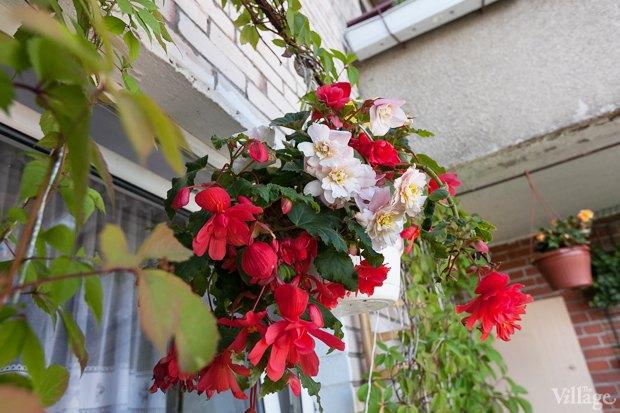 Где посадки: Что горожане выращивают на балконах иподоконниках. Изображение № 56.