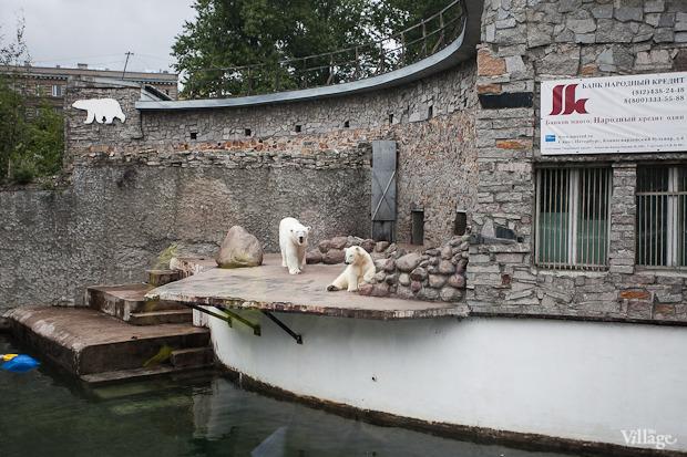 Как живёт и меняется Ленинградский зоопарк . Изображение № 28.