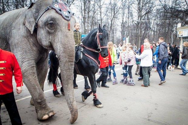 В «Сокольниках» повыходным проводят парады животных. Изображение № 3.