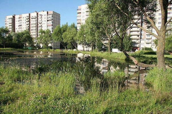 Пруд № 4586 (63 % — Карпатский пруд). Изображение № 1.