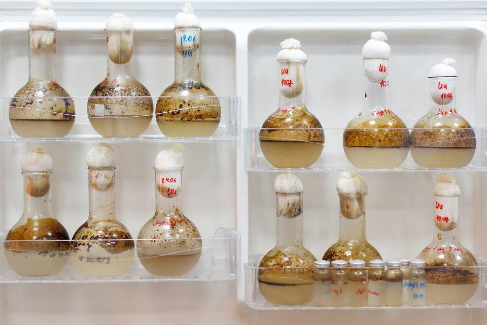 Микробиолог Андрей Шестаков— ополезных микробах, вреде молока ифинансировании науки. Изображение № 17.