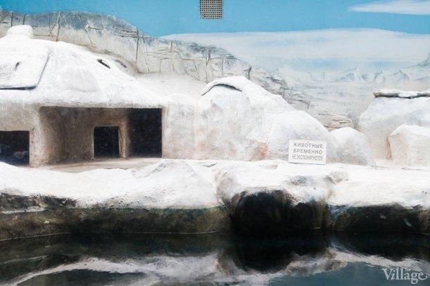 Директор московского зоопарка: «Погода была ужасной, всё выглядело очень грустно». Изображение № 24.