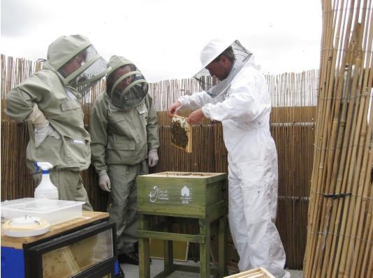 Как у них: «Городские пчёлы» в Лондоне. Изображение № 16.