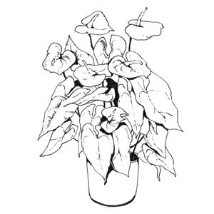 Гид The Village: Комнатные растения. Изображение № 36.