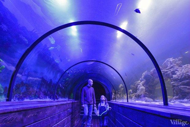 В «Детском мире» начал работать океанариум. Изображение № 3.