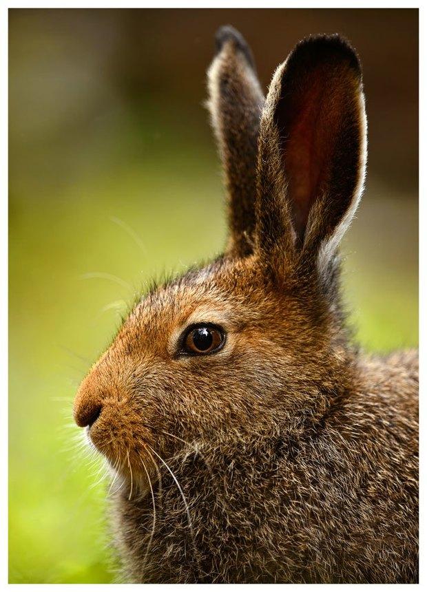 В Летнем саду выставят фотографии диких животных. Изображение № 4.