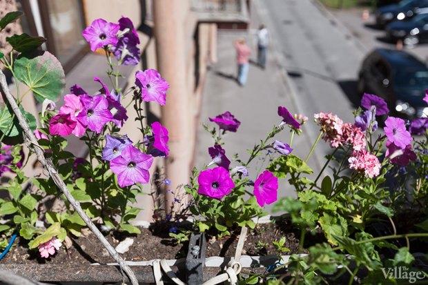 Где посадки: Что горожане выращивают на балконах иподоконниках. Изображение № 42.