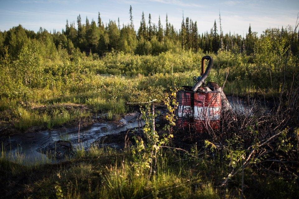 Как леса Коми очищают от нефти. Изображение № 13.