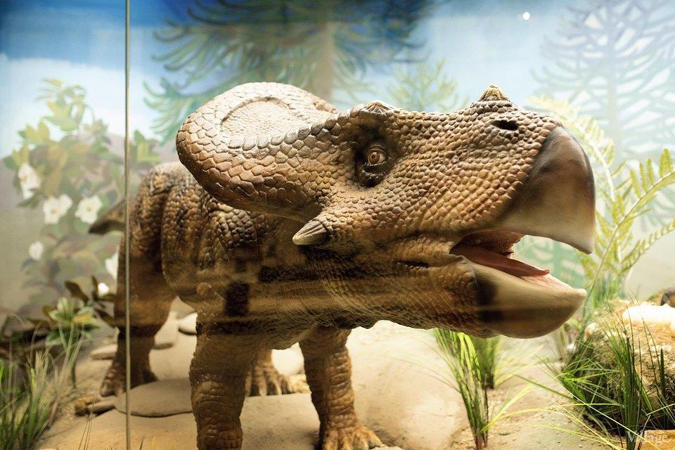 Перемены в Дарвиновском музее: «Можно бегать, прыгать и шуметь». Изображение № 4.