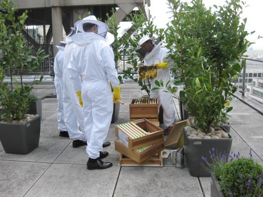 Как у них: «Городские пчёлы» в Лондоне. Изображение №11.