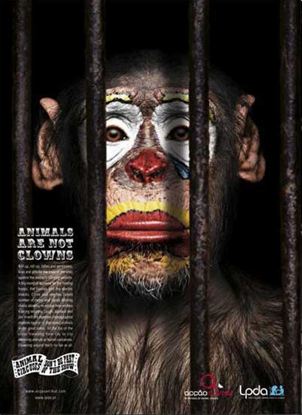 Социальная реклама португальского агенства Partners Lisboa: «Животные не клоуны», «Животный цирк: не будьте частью шоу». Изображение № 6.